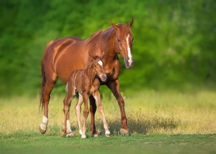8. Meet Adorable 'Tonekko' Horses
