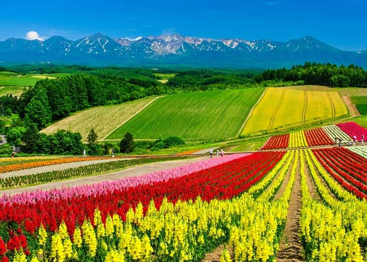 What Kind of Flowers Grow in Hokkaido and When are the Best Times to See Them?