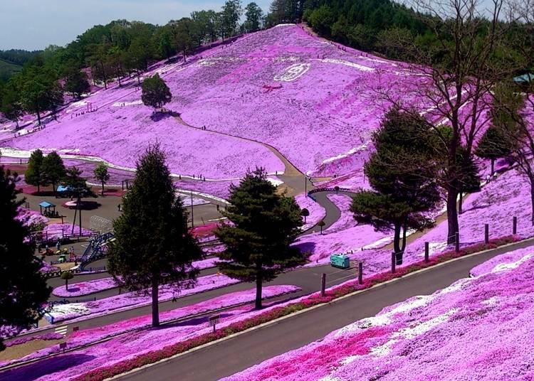 Hokkaido's flower season lasts from April to October!