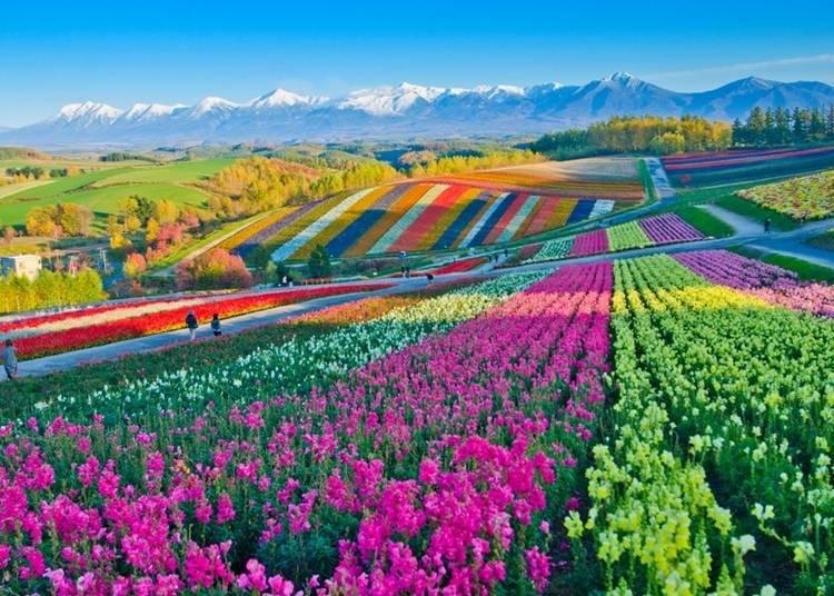9. Be impressed by the vast and beautiful Hokkaido flower fields!
