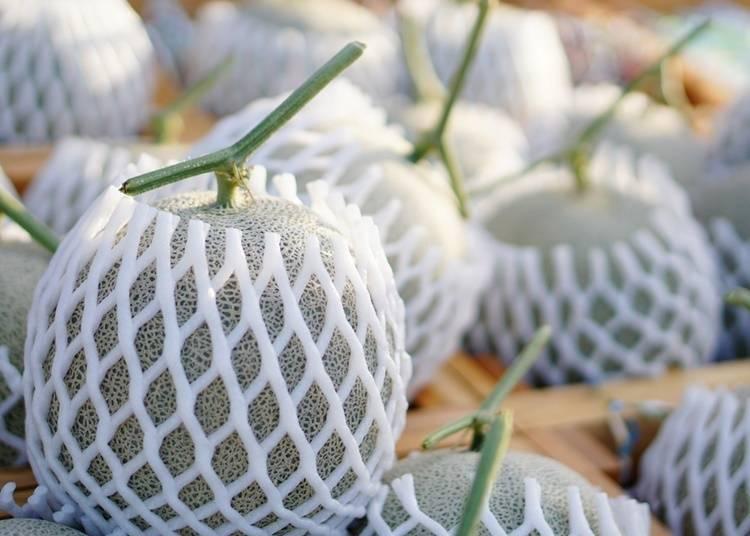 哪里可以买到北海道哈密瓜?