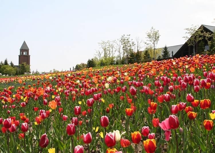 6. Takino Suzuran Hillside Park: Leisurely fun all year round