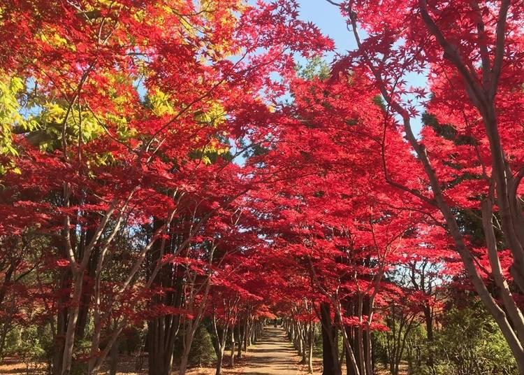 4.日本らしい春夏秋冬の自然美を楽しめる「平岡樹芸センター」