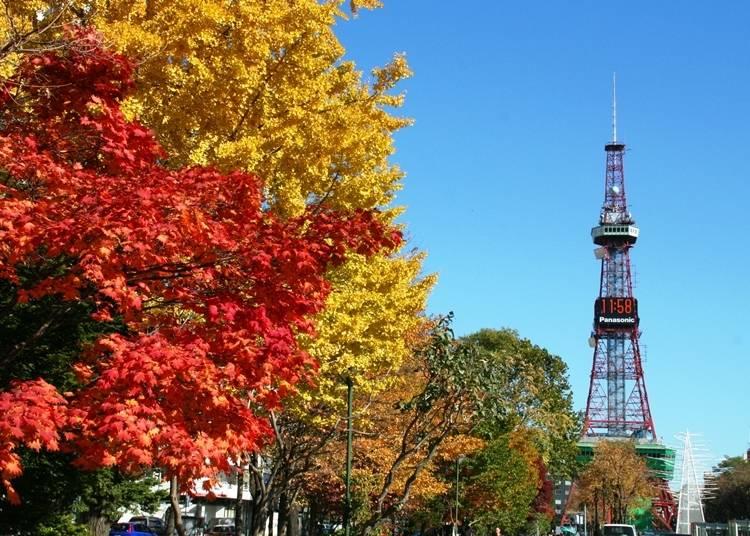 8. 札幌市中心部にある年中楽しめる「大通公園」