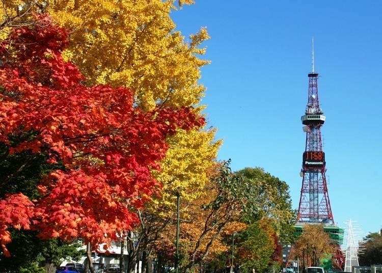 8.札幌中心区一整年都有乐趣~大通公园