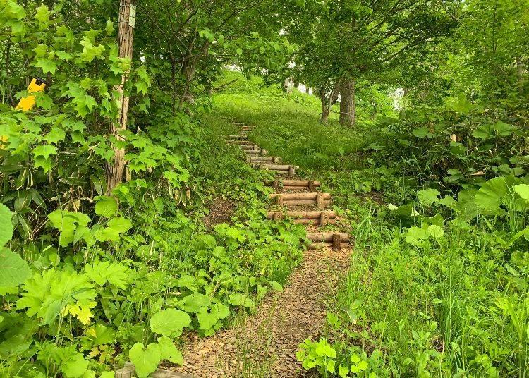 2)森の向こうに雄大なパノラマが開ける「桜ヶ丘公園」