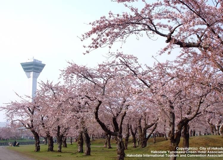 9.函館の歴史を今に伝える桜の名所「五稜郭公園」