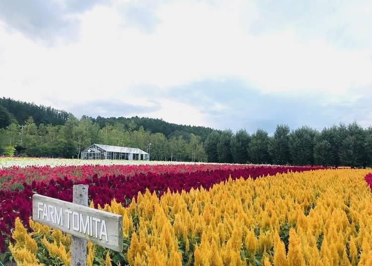6:花畑以外にも見どころいっぱい「ファーム富田&とみたメロンハウス」