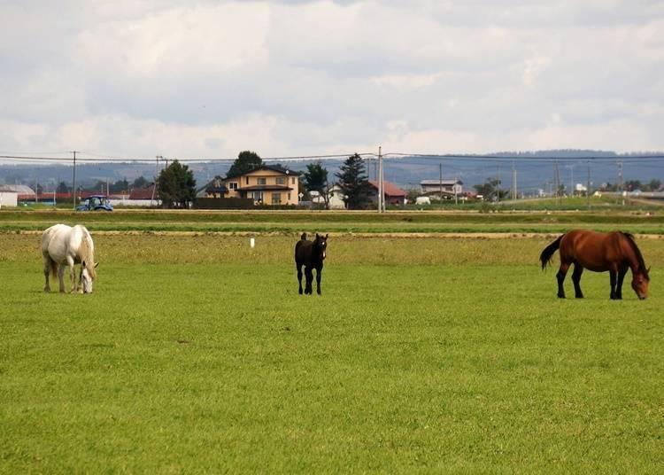 9:所见之处都是美景~在中富良野町的田园地带骑脚踏车