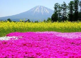 まるで絵画のよう!春・初夏の「北海道」で見られる感動の絶景10選
