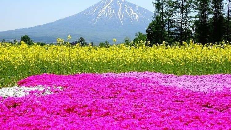 芝櫻、薰衣草好迷人!北海道令人感動不已的10處春季夏季美景