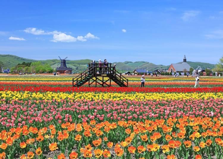 2)5~6月 かみゆうべつチューリップ公園(湧別町)