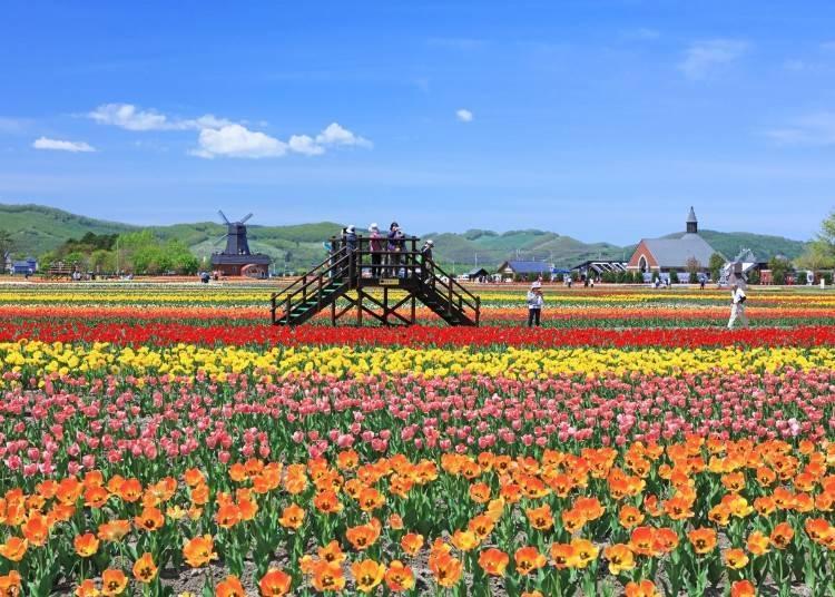 2)5~6月  湧別町鬱金香公園(湧別町)