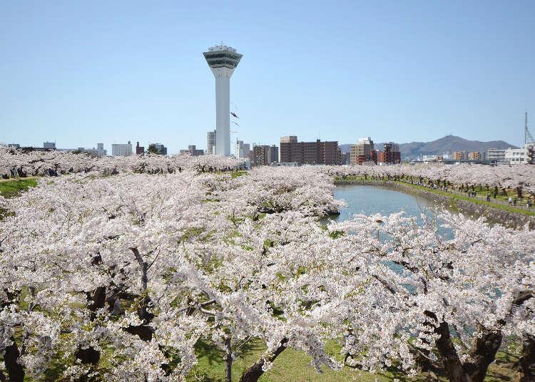 홋카이도의 인기 축제와 이벤트 일정(봄과 여름시즌)