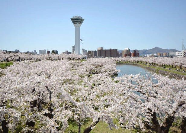 【2021年最新】北海道で人気のお祭り&イベント10選【春・夏編】