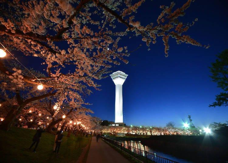 April / May: Sakura Night Illuminations at Goryokaku Park (Hakodate City)