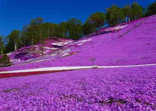 【2021年最新版】北海道人氣祭典&活動行程,春‧夏篇