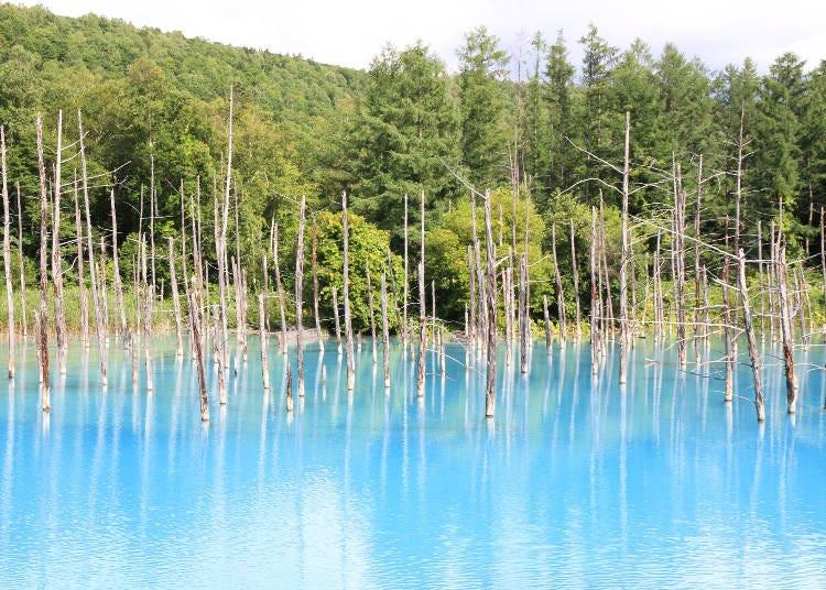 16:00 偶然による奇跡で誕生した「白金青い池」へ