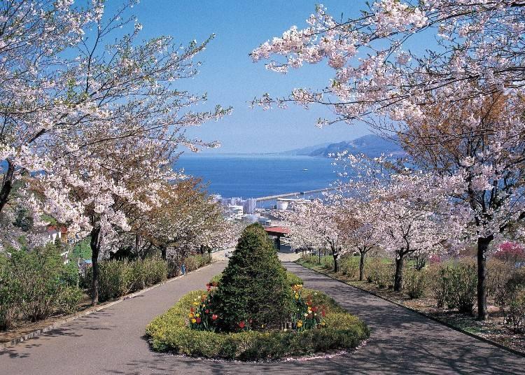 14:00 요염한 대비가 그림이 되는 '데미야 공원'에서 꽃구경
