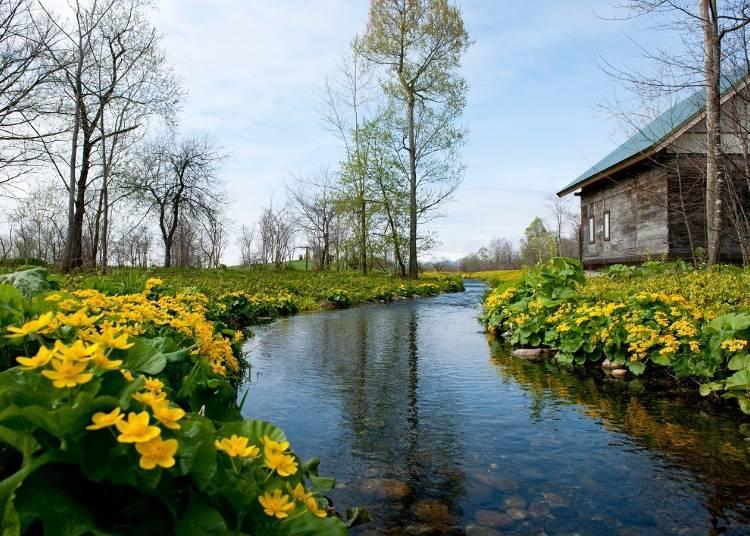 10 : 00 그림과 같은 아름다운 정원이 펼쳐지는 '롯카노 모리(롯카의 숲)'으로