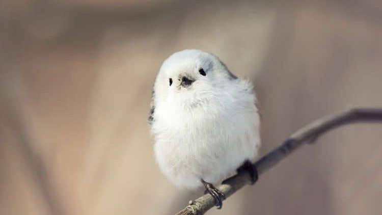 出会えたら超ラッキー!北海道で見つかる可愛い野生動物10種