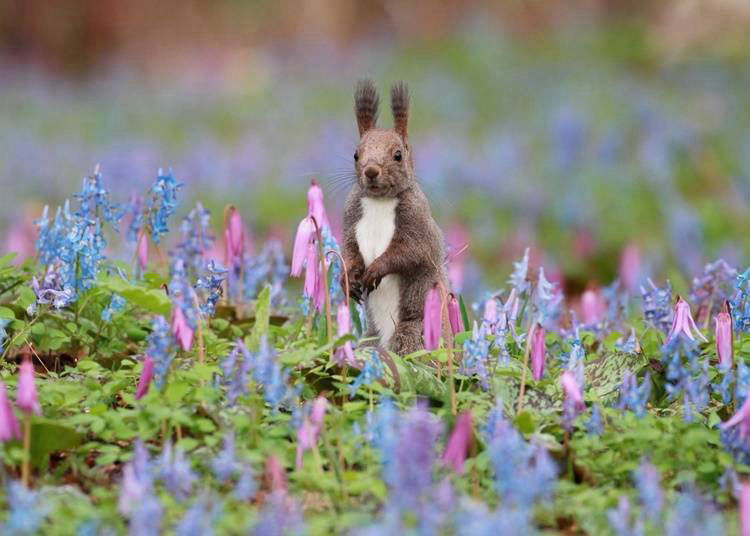 10 Absolutely Adorable Animals in Hokkaido You May Encounter on a Lucky Day!