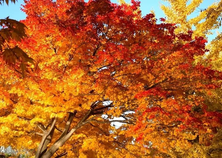 北海道での紅葉観賞は状況確認と防寒着を忘れずに!