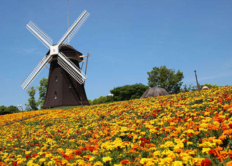 Visit Osaka's Gorgeous Tsurumi Ryokuchi Park for Instaworthy Photos of Flowers and Rare Plants!