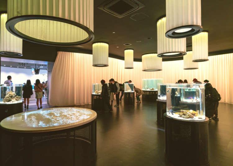 Interactive Aquazoo, NIFREL Osaka: 7 Fun Ways to Enjoy Art and Animals up Close!