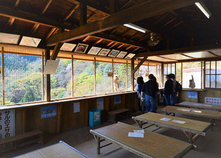 Hand-Feed the Monkeys at the Arashiyama Monkey Park Rest Area!