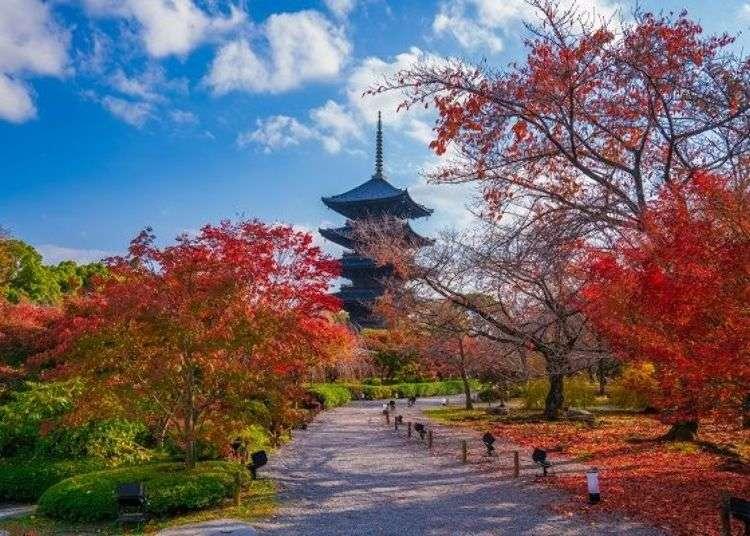 京都賞楓必去!東寺的五重塔、金堂及美麗楓葉
