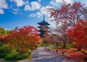 Toji Temple: Exploring Around the Famous Kyoto Pagoda in Autumn!