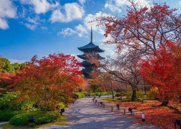京都东寺赏枫必去!五重塔、金堂及美丽红叶