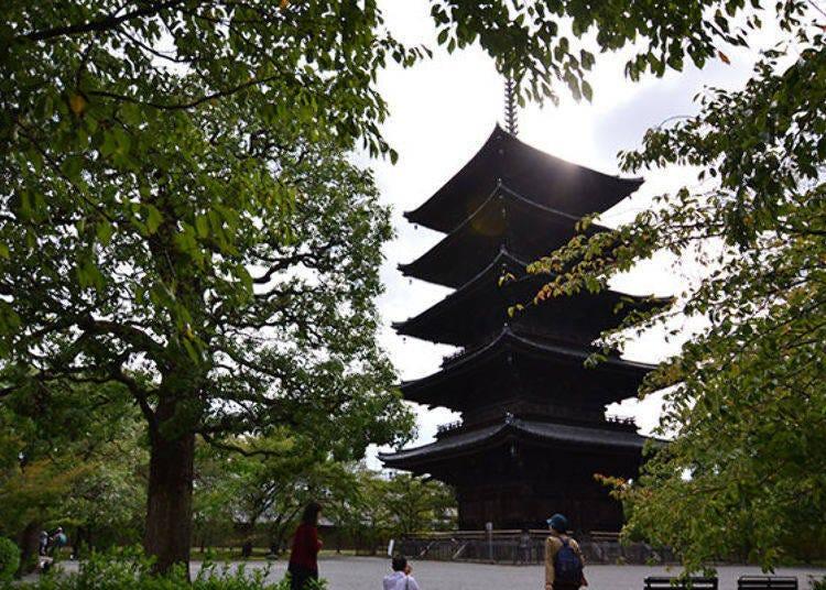 高度約55公尺!日本國內最高木造之塔-東寺的五重塔