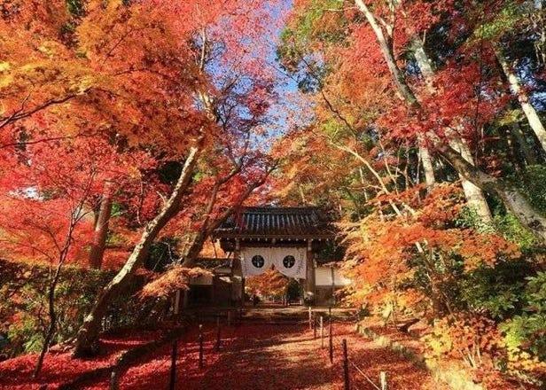 Komyoji Temple's Momiji-sando: Fall Colors at Kyoto's Ancient Temple