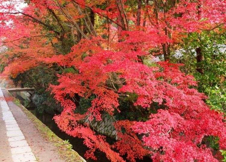Kyoto Fall Sightseeing: Sights and Shops Along the Famous Philosopher's Path - LIVE JAPAN