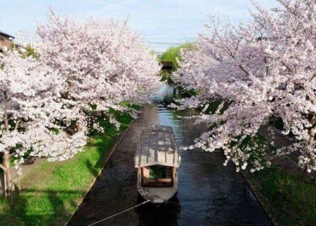 4 Must-Visit Spots in Kyoto's Fushimi Sake District: Sake Tasting and More!