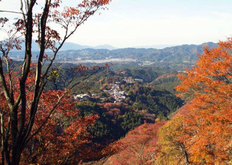 紅葉に染まる!祈りの聖地・吉野山で、錦秋の空中さんぽ