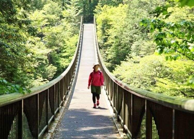 This Wild Footbridge Takes You Through Nara's Breathtaking Mitarai Valley