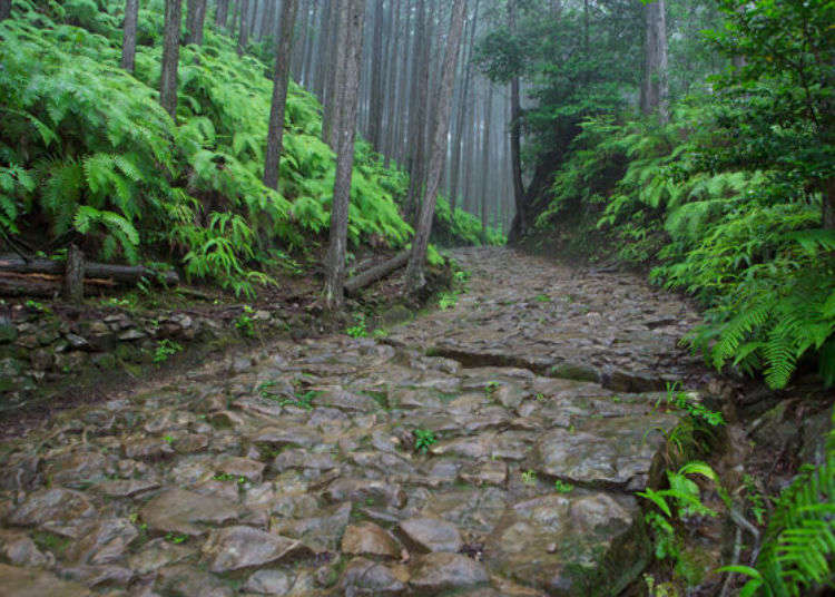 Kumano Kodo Pilgrimage Guide: Walk amidst the gods and nature on the old Kumano Kodo, a World Heritage Site