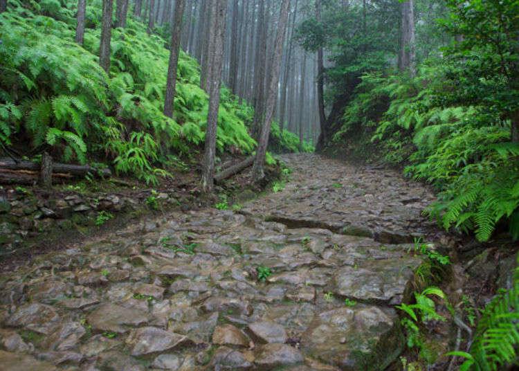 穿梭於自然氣息滿溢的神聖森林小道之中!世界遺產熊野古道登山