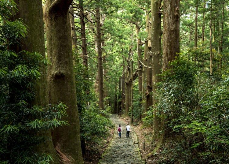 Trekking the Kumano Kodo: Walk Through Nature Along Japan's Famous Pilgrimage Trail And World Heritage Site