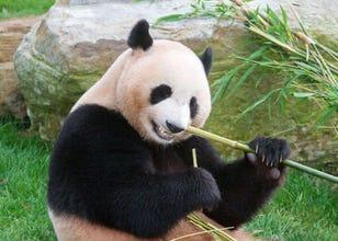 距離日本第一大貓熊最近的樂園「冒險大世界Adventure World」實在是太精采豐富!