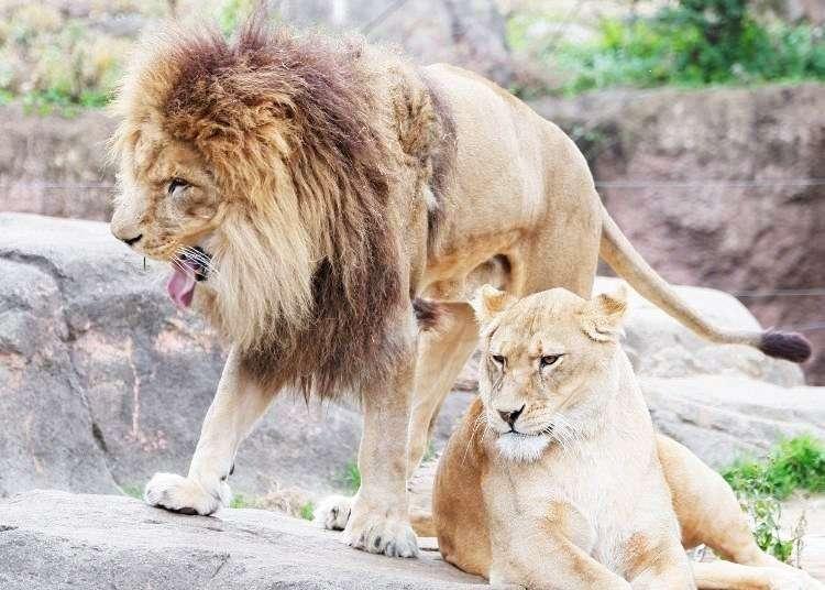 大阪・天王寺動物園の見所徹底ガイド 外国人にも大人気なワケは?