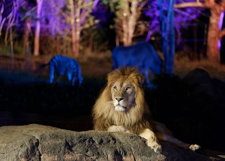 夜の動物の姿が見られる「ナイトZOO」も話題