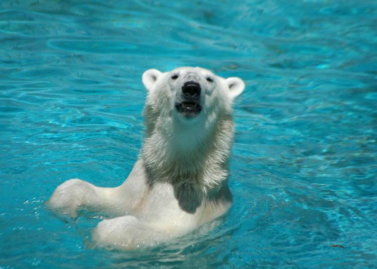最受外國人喜愛的是哪三種動物?