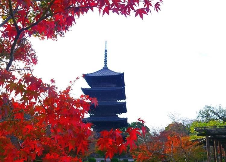 京都必去⑤东寺
