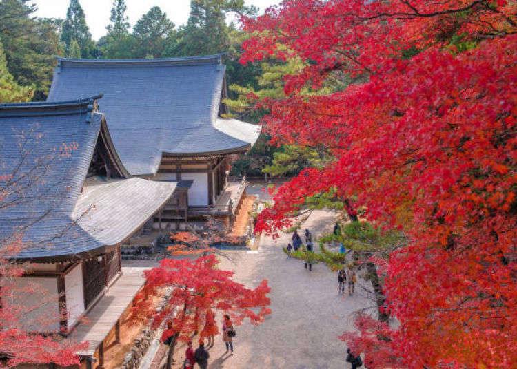 京都赏枫名胜不胜枚举,必访的观赏景点总整理