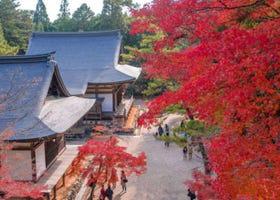 秋天必訪!京都5大賞楓景點&推薦住宿:嵐山、哲學之道等