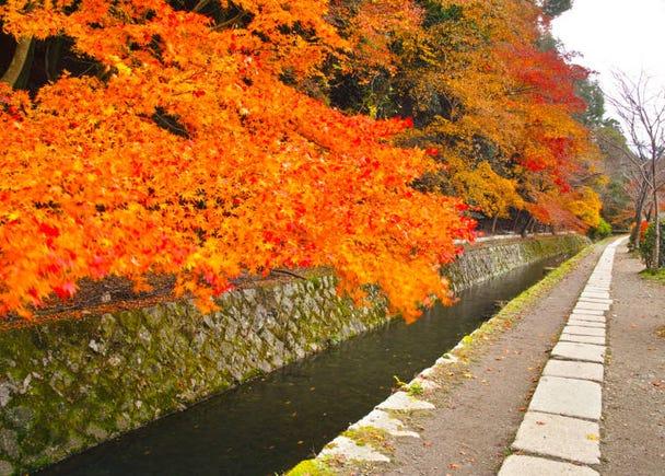 「哲学の道」を覆う紅葉のトンネル